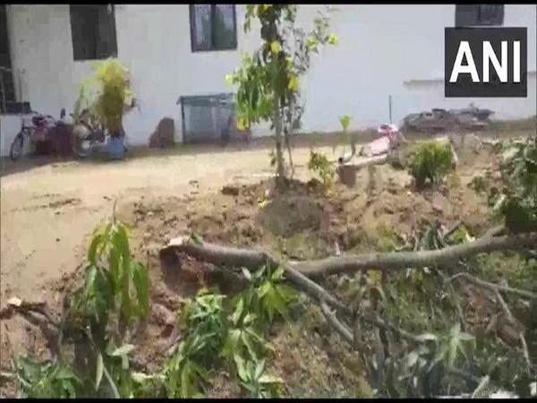 Elephant damaged trees, solar panel at BJP leader's residence in Chattisgarh's Jashpur