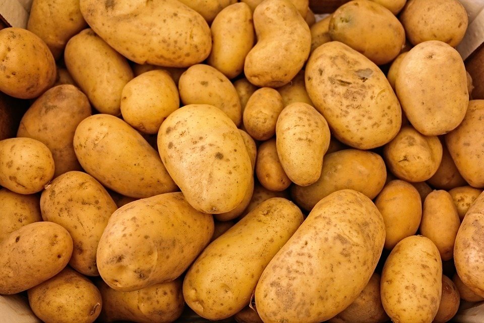Potato mop-top virus response closes out with industry taking lead on management