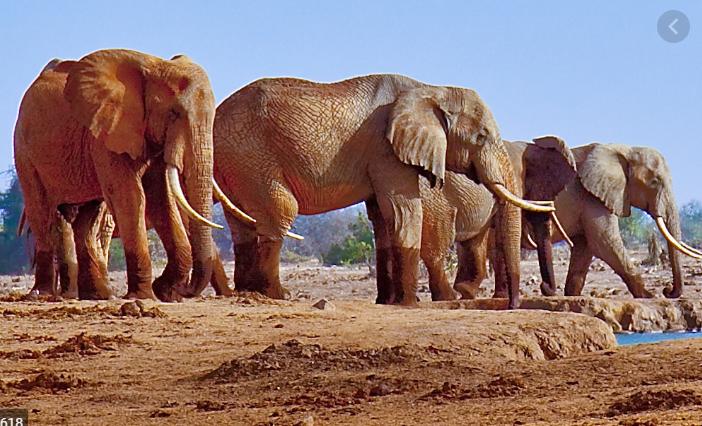 Odisha to set up elephant rehabilitation centre