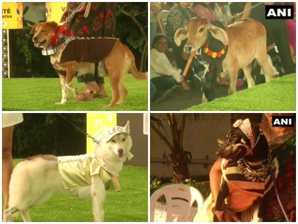 Dressed up pets take part in Chennai Pet Fashion Show