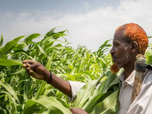Advocates for transforming global food systems named ahead of UN Food Systems Summit