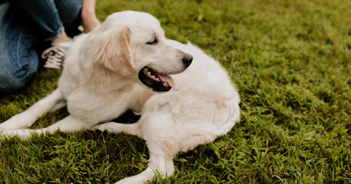 Researchers explore impact of obesity on dog's health