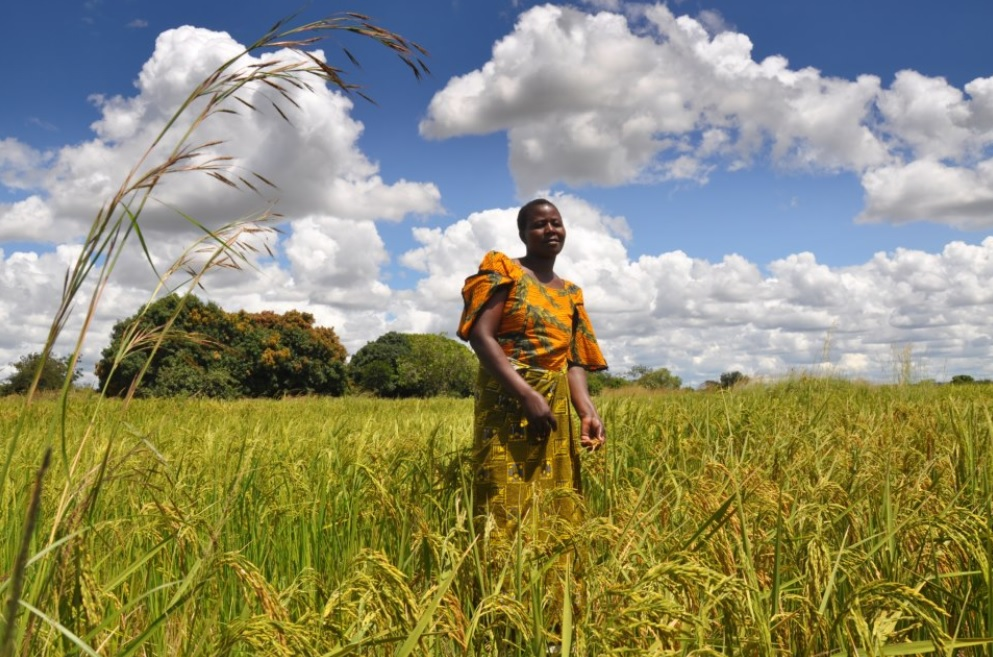 Agriculture Fast Track announces US$ 3,390,000 funding for 17 SMEs in Africa