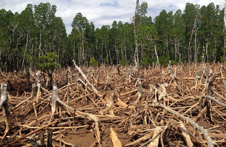 Deforestation has slowed down but still remains a concern, new UN report reveals