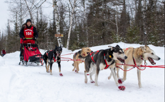 Alaska's Iditarod sled dog race is on, with COVID-19-altered course