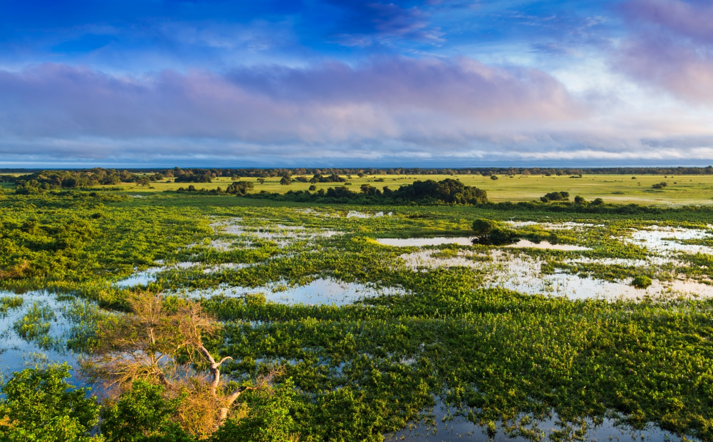 Coastal wetlands store more carbon with rise in sea levels