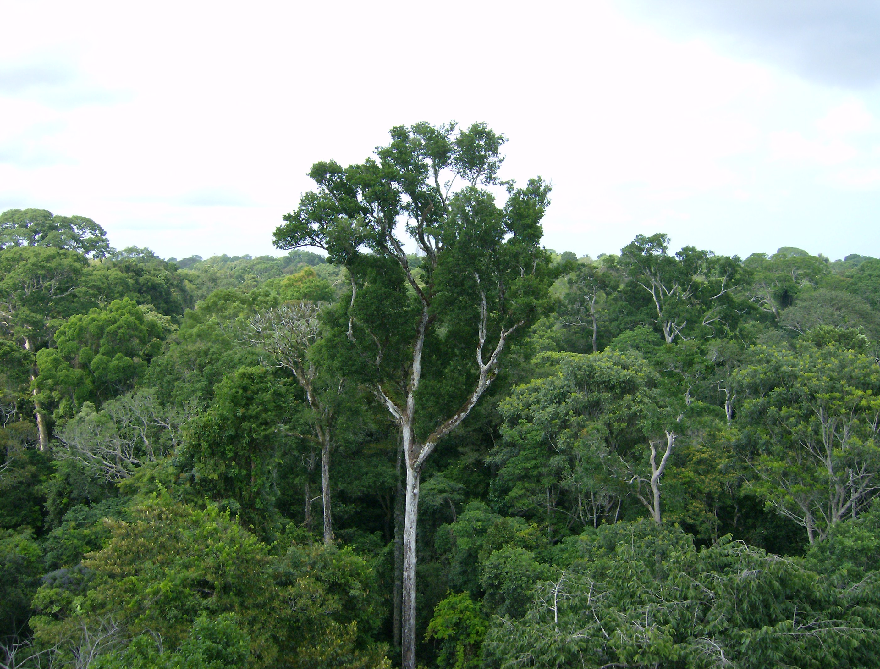 Scientists warn of bad year for fires in Brazil's Amazon and wetlands