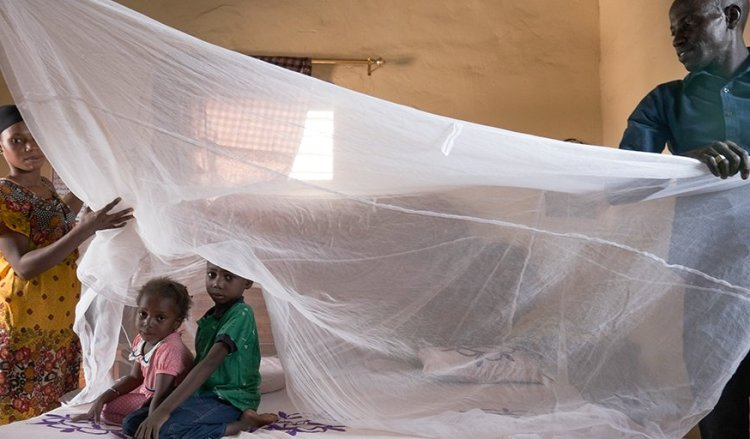 """Experts challenge WHO with """"epic"""" goal to eradicate malaria by 2050"""