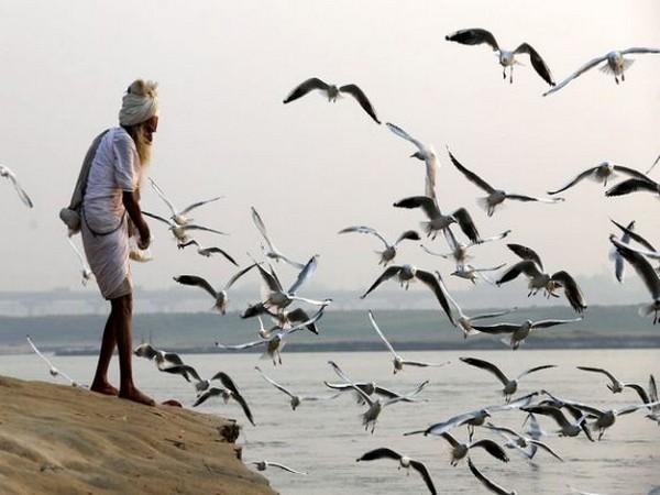 Lucknow Zoological Garden raises vigilance against bird flu
