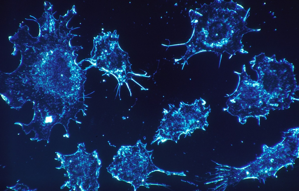 B-cells protein antibodies production to pave way for drug discovery
