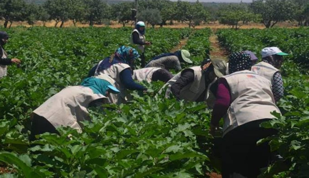EU to support economic development and job creation in Iraqi agricultural sector