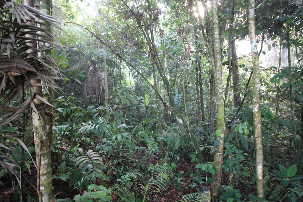 Rains come as saviour for Amazon forest threatened by fires, deforestation