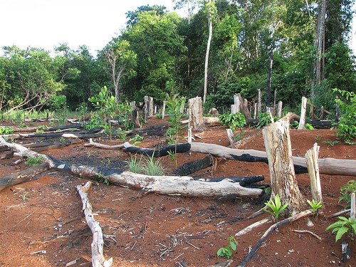 Ghana plants 5 million trees in a single day to combat deforestation