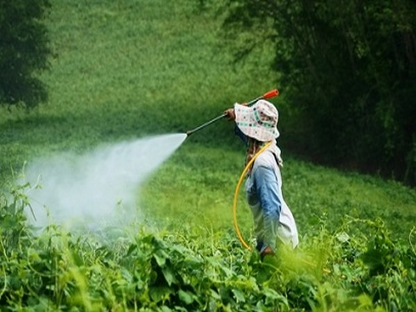 Swiss to vote on whether to become first European nation to ban synthetic pesticides