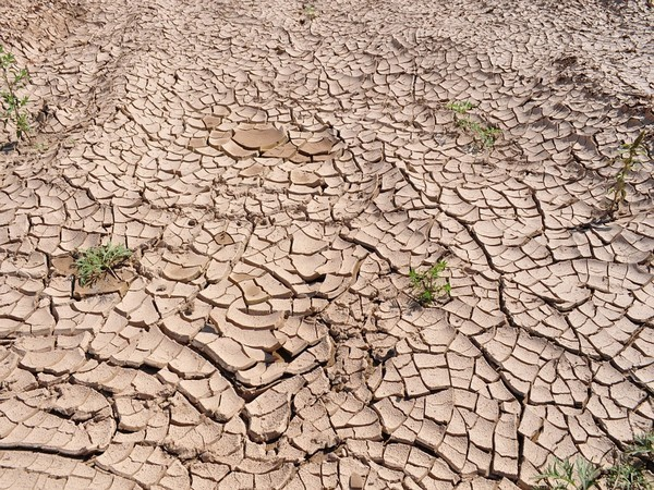 INSIGHT-Drought forces North American ranchers to sell off their future