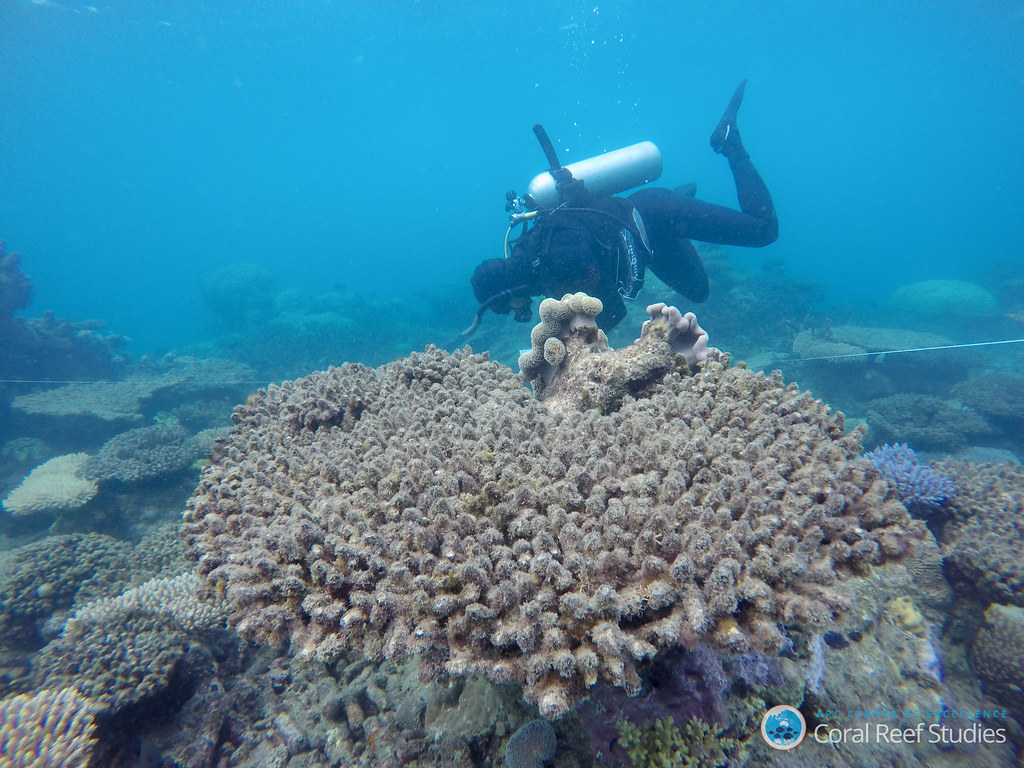 Global Fund for Coral Reefs to catalyze private sector investment blue economy