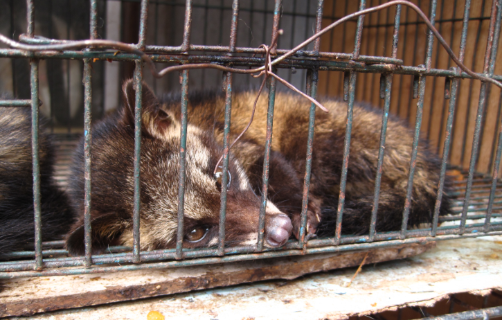 Hundreds protest in Poland against proposal to ban fur breeding