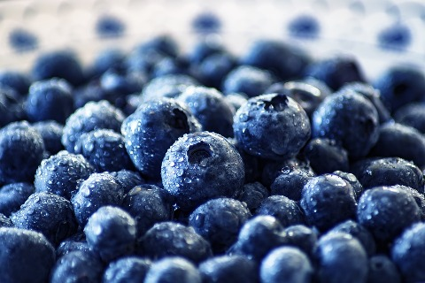 INI Farms Enters Into a Partnership With Munger Farms to Aid the Growth of Blueberries in India