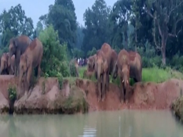 Odisha: People fear for crops as herd of elephants come in Mayubhanj