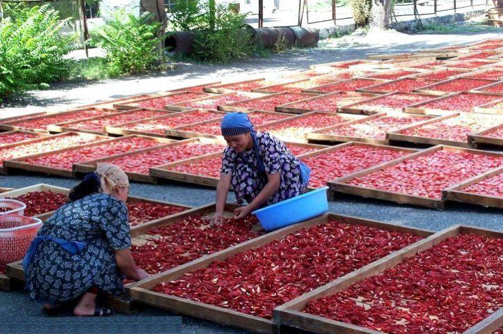 Pak mulling buying tomatoes from Iran as price skyrockets
