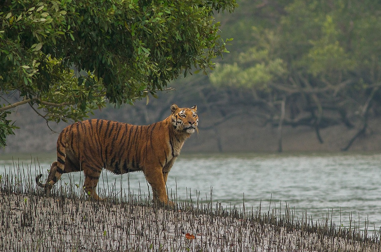 Similipal Tiger Reserve to remain closed from June 16