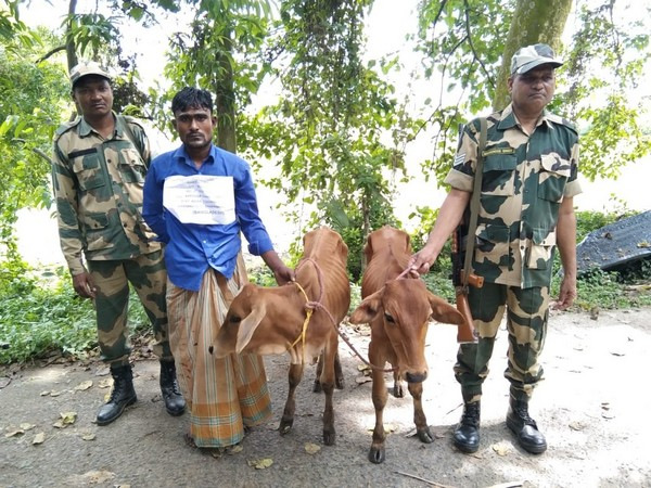 BSF nabs two Bangladeshi cattle smugglers in West Bengal's Malda
