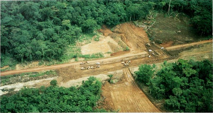 Deforestation, wildlife trade behind emergence of zoonotic diseases: Report