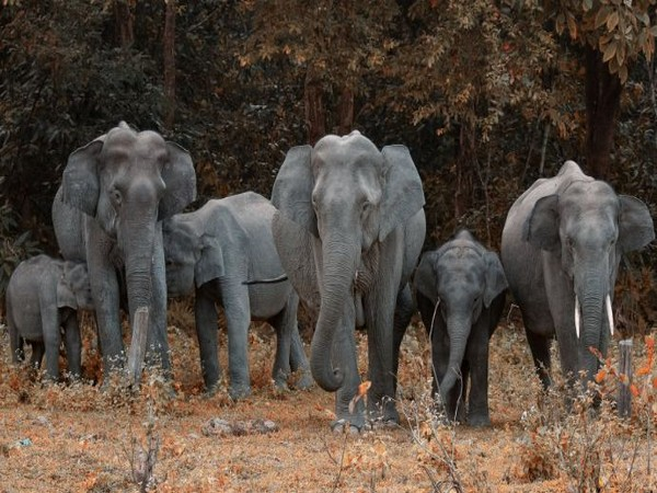 Elephants from Nepal damage crops in UP