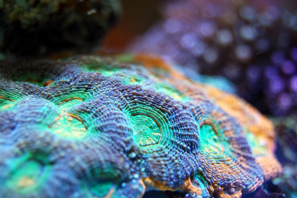 Threatened Caribbean coral reefs get a new ally: insurance