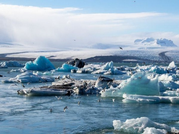 Cold-adapted Arctic species more vulnerable to climate change: Study