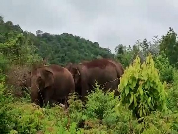 Wild elephant tramples woman tourist to death