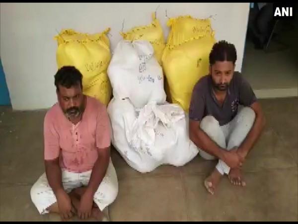 Meerut: STF seizes 235 kg marijuana, 2 held