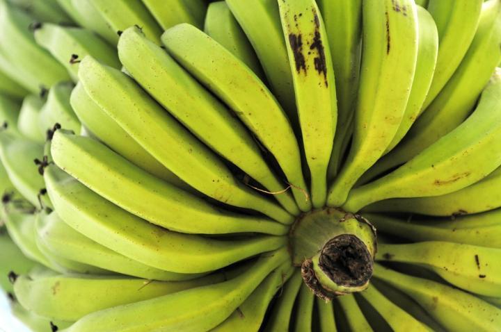 Uganda start-up bets big on banana waste
