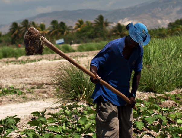 FEATURE-Haiti farmers eager to receive compensation after 'groundbreaking' land deal