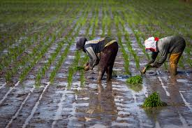 Govt always open to talks with farmers' unions to resolve issues over three new laws: Agriculture Minister Tomar