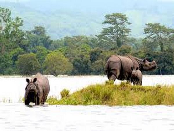 Assam floods: 70% of Kaziranga National Park submerged, animals taken to highlands