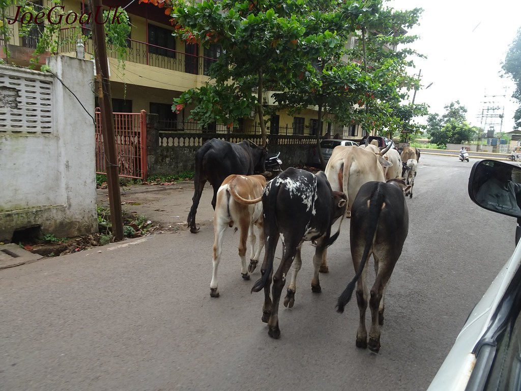 MP villagers parade cattle movers to police station