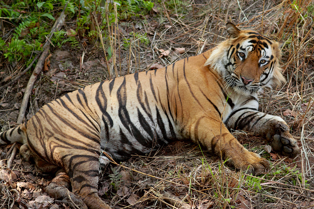 Raj govt orders administrative inquiry into tiger's death in Sariska reserve