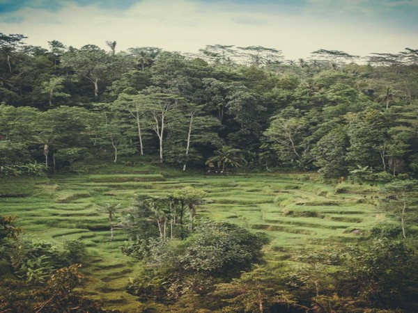 Earth's climate control system got changed due to arrival of land plants: Study