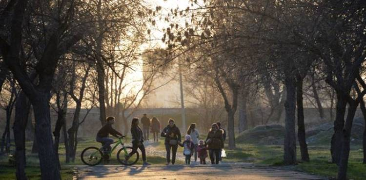 Nine Benefits of Urban trees and forests for greener cities