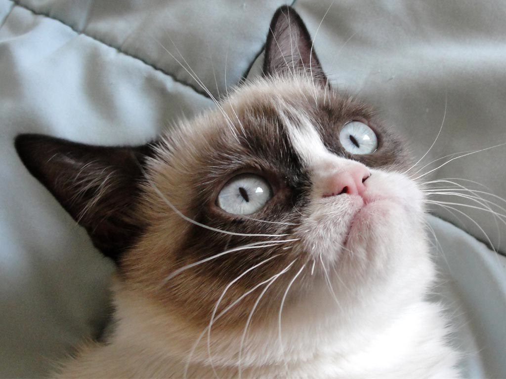 Grumpy Cat passes away; How this cat's scowl inspired millions of memes