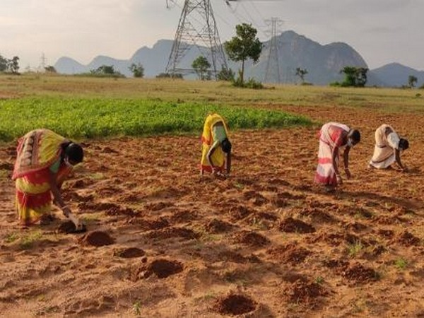 Walmart Foundation announces two new grants to help India's smallholder farmers