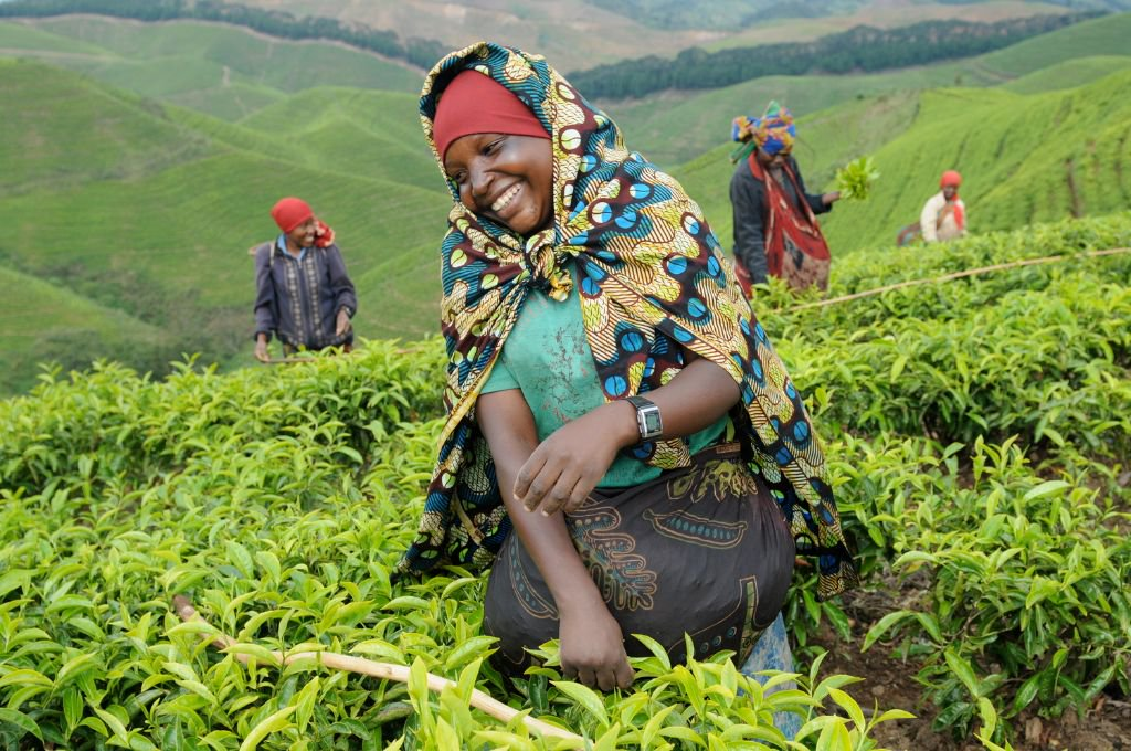 Rwanda tea export revenues generate more than USD 93 mln in fiscal year 2019/2020