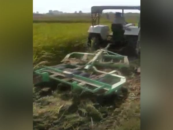 Farmer destroys 4.5 acres of standing paddy crop as he did not get a fair price
