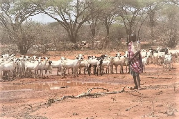 Drought in Africa: Natural calamities forced the farmers to pray with bended knees