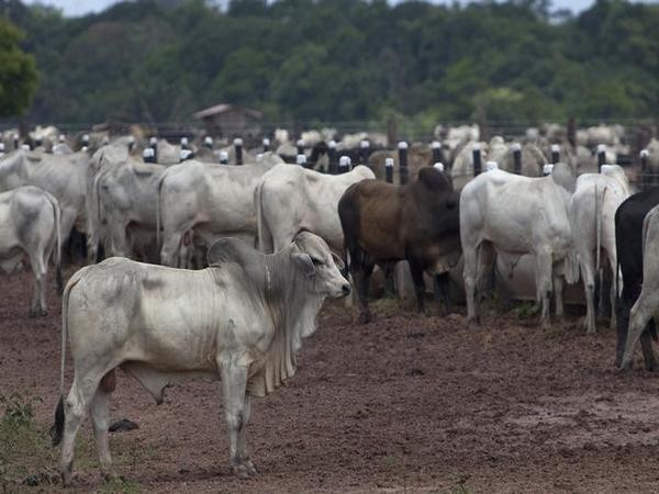 China's high demand for beef from Brazil fuelling environmental crisis