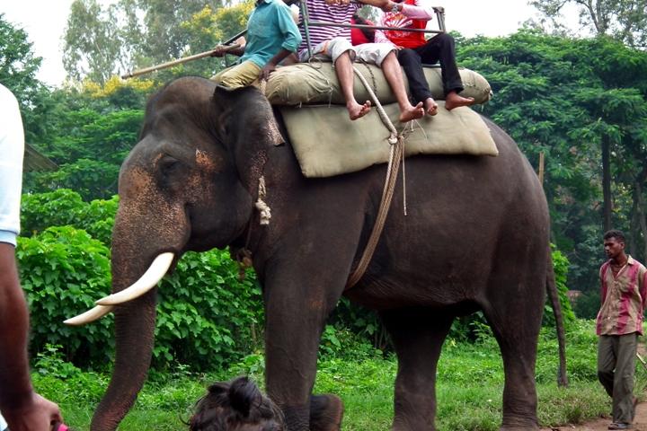 Tanzania says elephant, rhino populations rebounding after anti-poaching crackdown