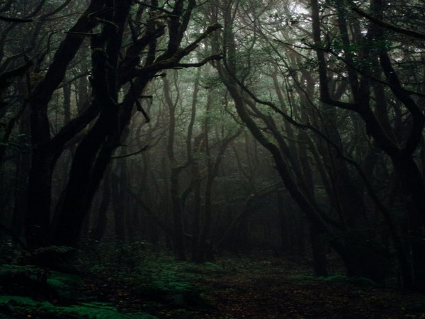 Across globe forests play major role in depositing toxic mercury