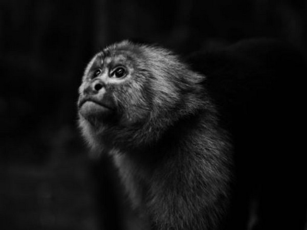 China reports first death due to Monkey B virus