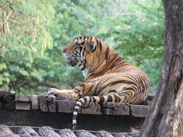 Pilibhit Tiger Reserve gets global award for doubling tiger population